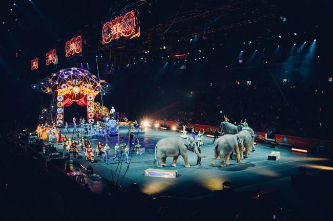 elephant-circus_1508441439237-118809282.jpg