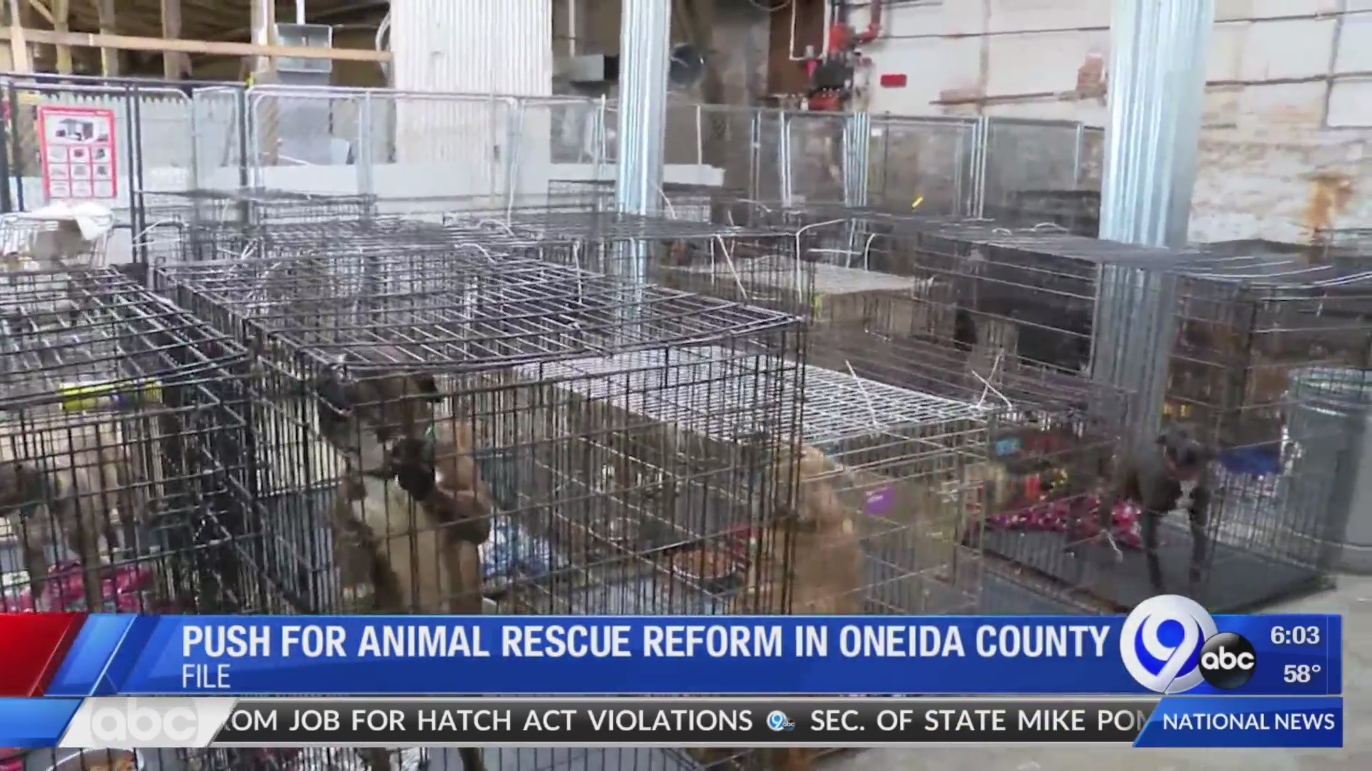 Investigation finds no violations at Road to a Home dog rescue