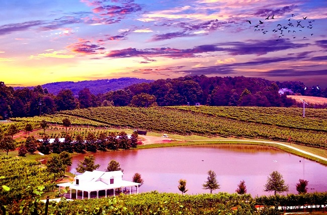 Vignoble de Napa Valley en Californie