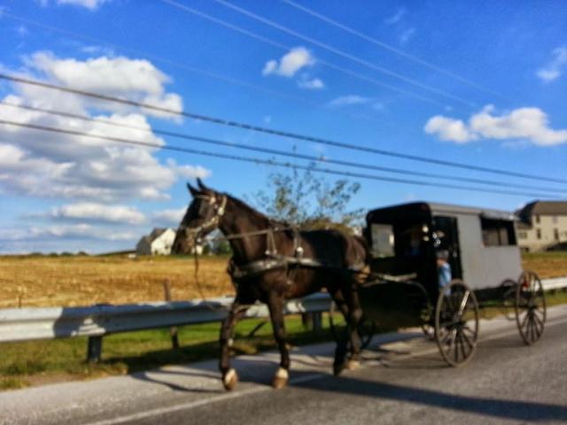 Carruaje Amish