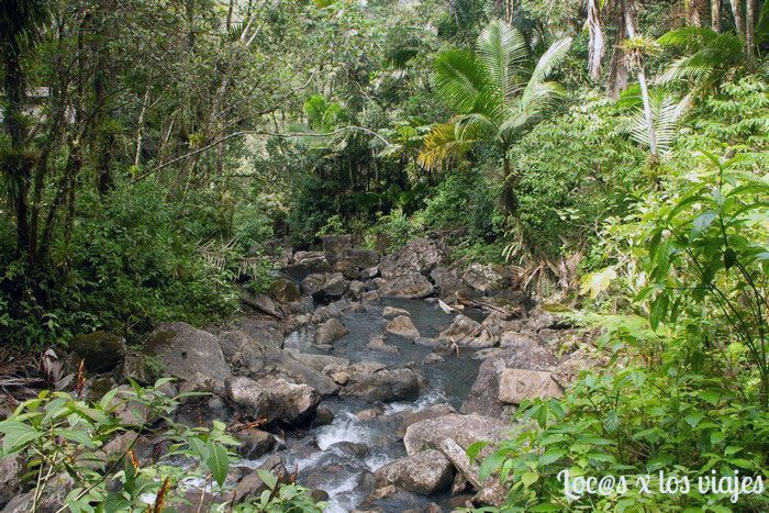 Parque Nacional de El Yunque: Vereda de la Mina