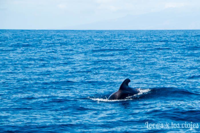 Tenerife: Calderón tropical acercándose a nuestro barco