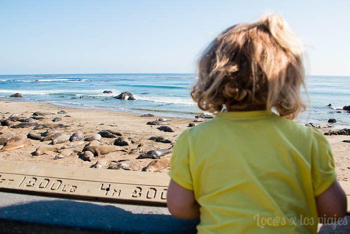 Big Sur - Elephant Seal Viewing en Piedras Blanca