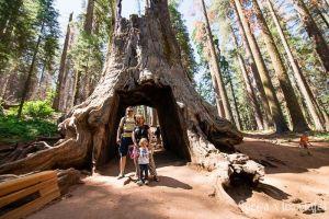 Tuolumne Grove en Yosemite