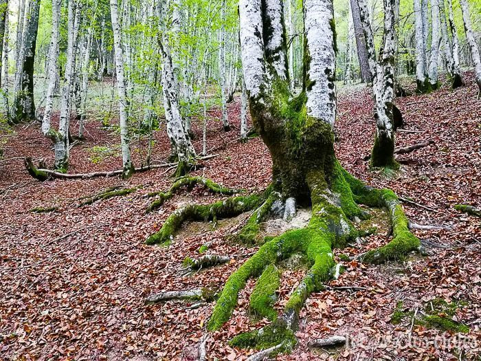 Qué ver en Navarra: Selva de Irati