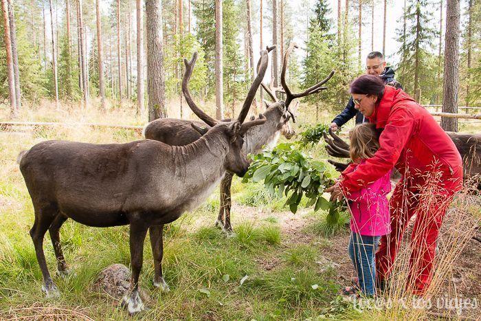 Renos de Santa Claus Reindeer