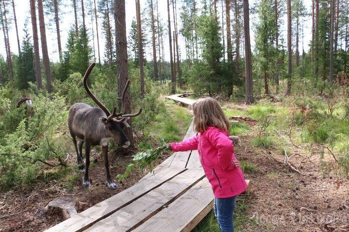 Renos en Rovaniemi