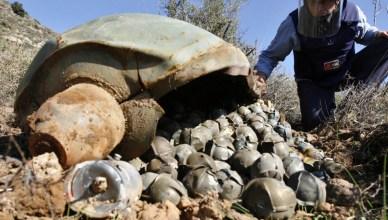 Deze clusterbom was blijkbaar defect. Ze is ergens in Jemen neergestort zonder open te klappen. De kleine clusterbommen die er in zaten blijven nog jarenlang levensgevaarlijk explosief