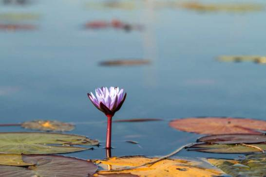 Chobe River.gallery_image.3
