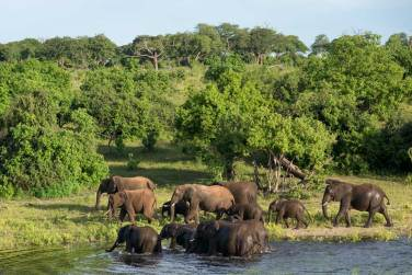 Elephants in Chobe Nature Reserve.gallery_image.2