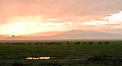 Masai Mara National Park.gallery_image.3