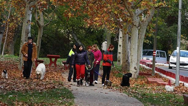dueños de perros más responsables para mejorar la Calidad de Vida en Lodosa. Paseando con perros por el parque de El Ferial en Lodosa