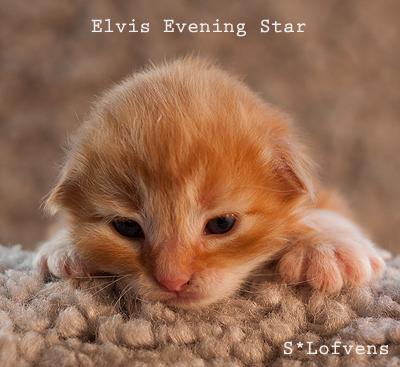 Elvis_2w_6795
