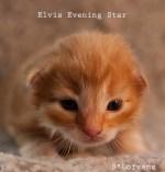 Elvis_2w_6807