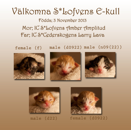 ekullen_newborn