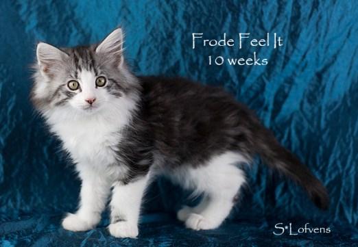 Frode Feel It, 10 weeks, NFO ns 09 22