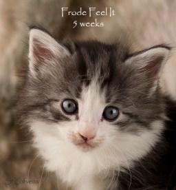 Frode Feel It, 5 weeks, NFO n 09 22