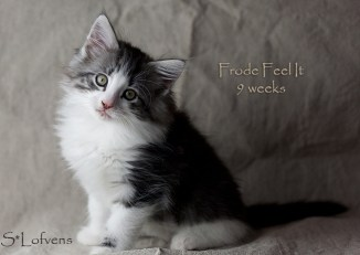 Frode Feel It, 9 weeks, NFO ns 09 22