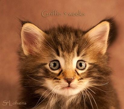 Griffin, 5 weeks, NFO n 09 22