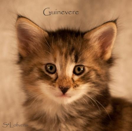 Guinevere, 6 weeks, female, NFO f 09 22