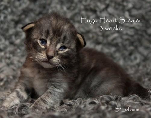 Hugo Heart Stealer, 3w
