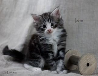 Izon I Got You, 6 weeks