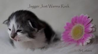 Jagger Just Wanna Rock