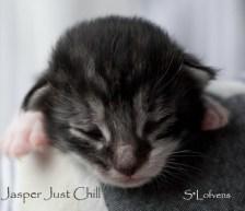 Jasper Just Chill