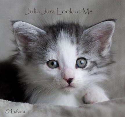 Julia Just Look at Me