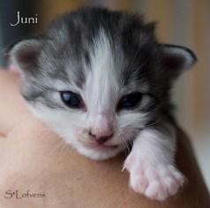 Juni Just One Kiss