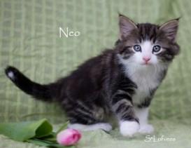 Neo 7 weeks