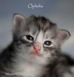 Ophelia 2 weeks