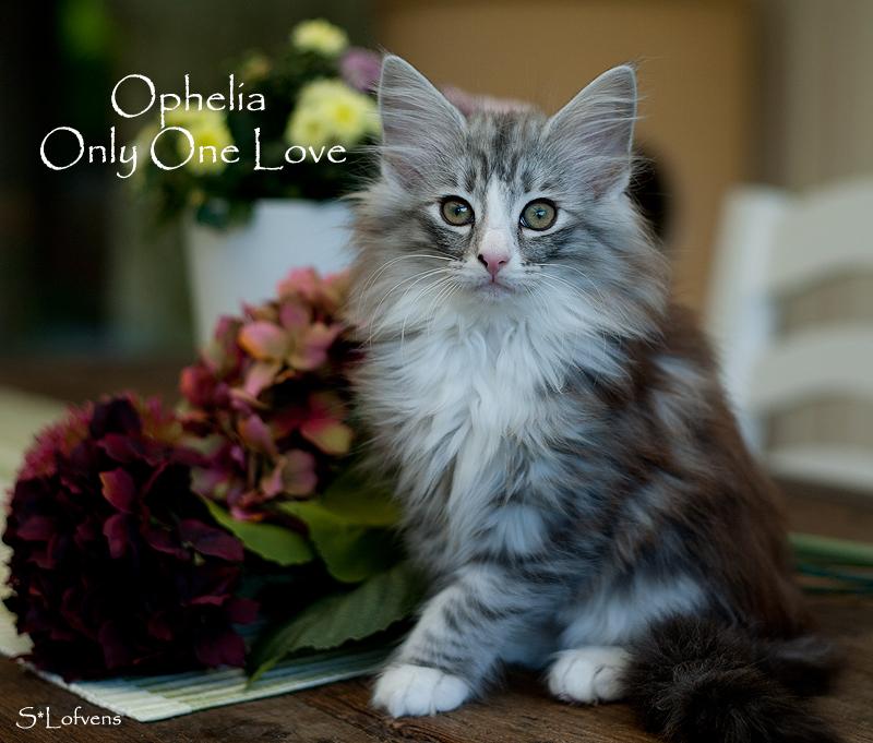Ophelia - vår fotomodell