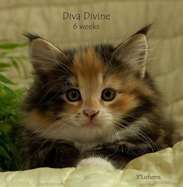 diva_6w_txt_5078