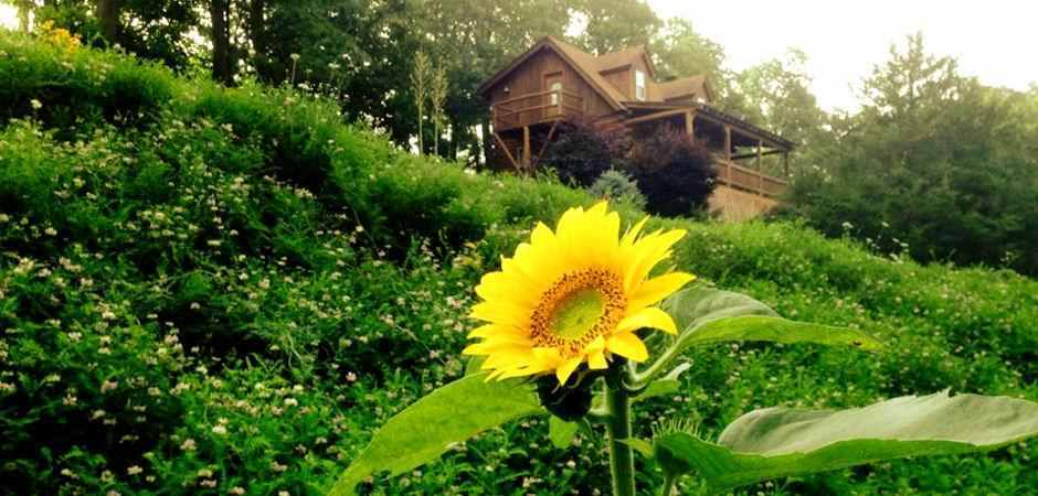 Eureka Springs Cabin Rentals in the Arkansas Ozarks with