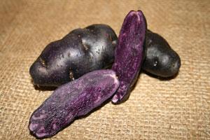 Seed-Potato-purple-peruvian