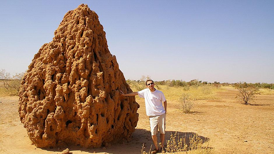 Termiti grade puno veće građevine nego ljudi