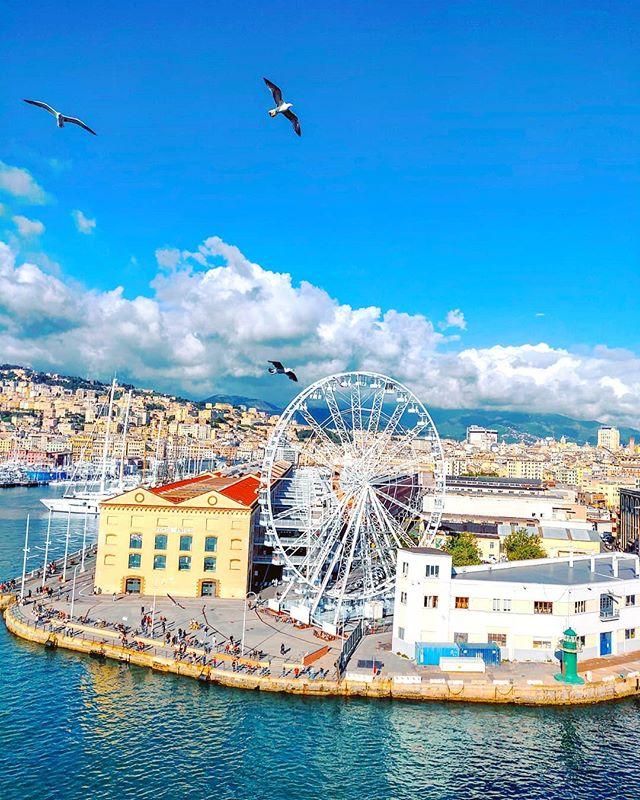 One round more... •••#genova #panoramic #seagull #reflection #cruising #cruise #crew #sailing #travel #traveling #traveler #instatravel #instapassport #instatraveling #travelgram #travelingram #igtravel #travelblog #sea #travelstoke