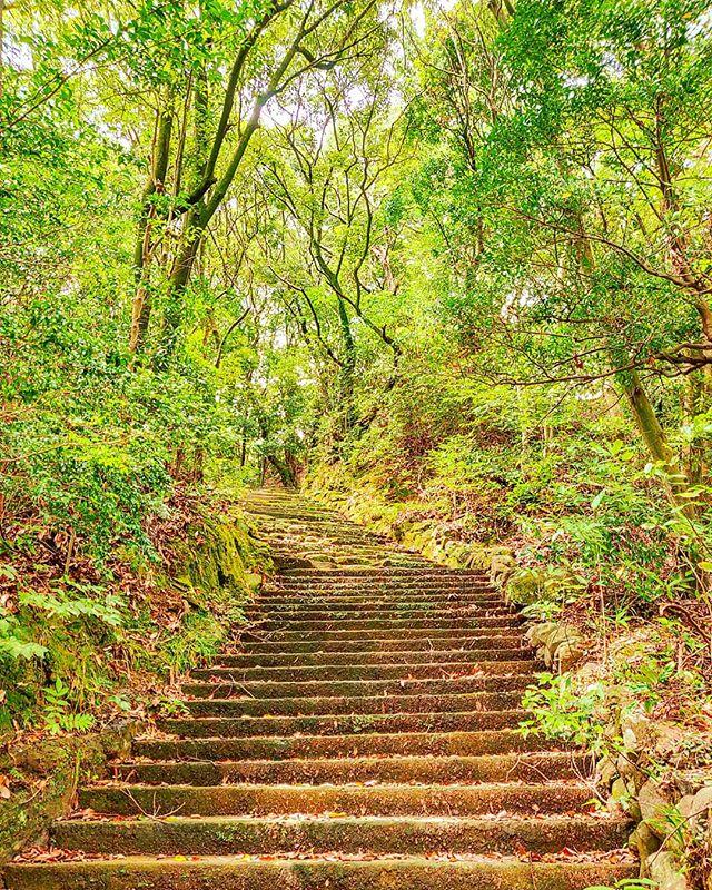 The stairs for heaven •••#sasebo #park #green #maidirebanzai #stairs #nature #theoutdoorfolk #nature_lovers #naturephotography #natureshots #outdoors #nature_good #getoutside #earthgallery #tree_magic #tree #natureworld_photography #beautyofnature #in2nature #ig_naturelovers #ig_nature #natureswonder #ig_naturevibes #naturegram #mothernature