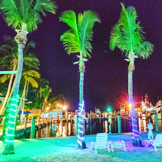 What a great dinner at Sharky's   #bimini #bahamas #caribbeanlife #traveling #travelpic #traveladdict #travelphotography #travelgram #travelstoke #traveller #caribbeanvibes #instatravel #travellife #traveltheworld #caribbean #travels #palm #travelphoto #traveler #travelers #travel #travelblog #travelholic #travelling #bimini #palmtrees