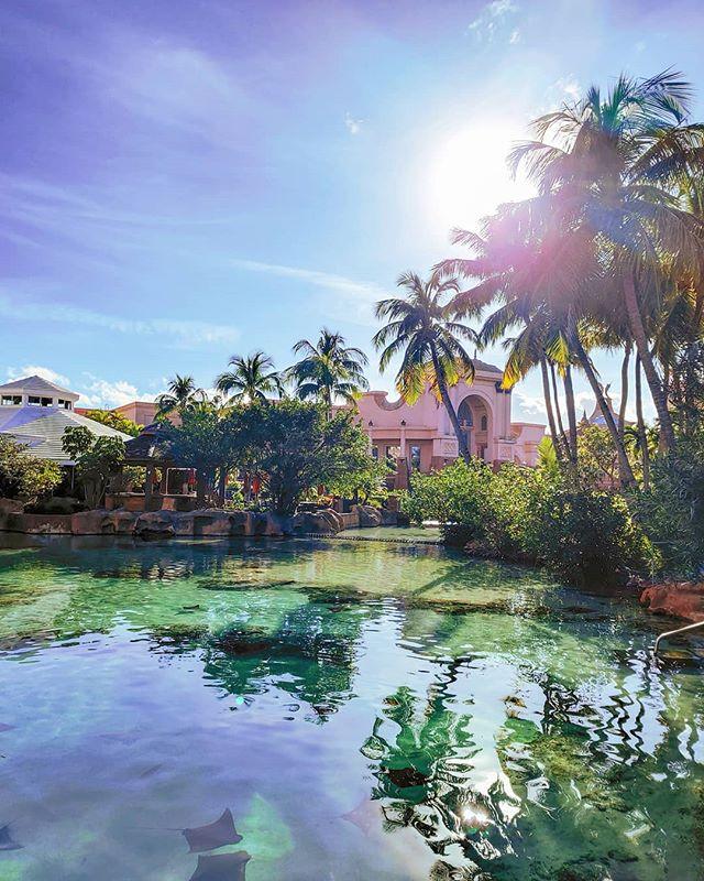 Lost lagoon 🏝️🤙 #nassau #Bahamas #palm #palms #travelingram #travellife #sunsets #travelphoto #traveltheworld #travelblog #sunnyday #travelphotography #atlantis #travelblogger #travelstoke #travel #traveller #sunlight #travelgram #travelling #traveling #traveladdict #sunset #traveldiaries #traveler #travelpics