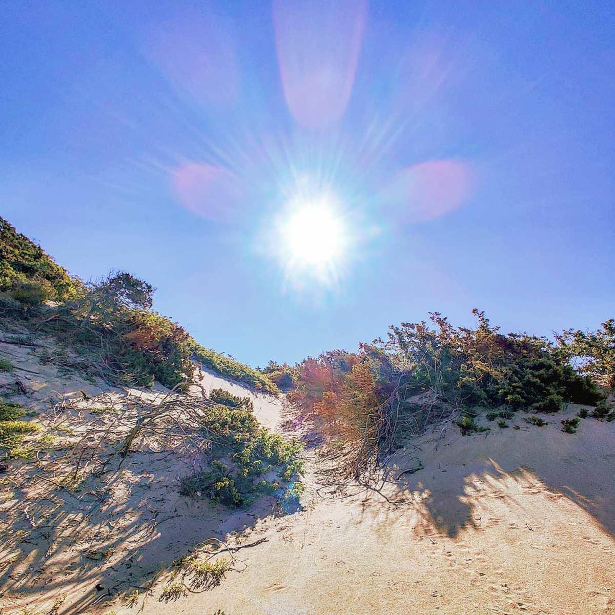 Dunes life 🏜️😎🤙#sabaudia #italy #Italia #sand #nature #travelphotography #travelgram #beach #traveler #beachvibes #travelling #traveling #beachlife #traveller #travelblogger #naturelovers #naturephotography #travel #sun #sunglare #dunes #dune #spiaggia #nature