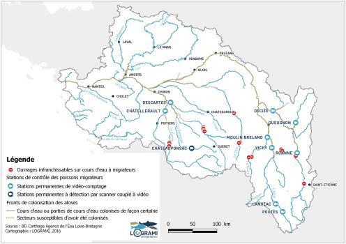 Fronts de colonisation des aloses sur les cours d'eau du bassin de la Loire en 2015