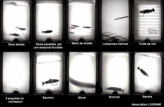 Passages de différentes espèces