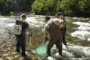 Pêche tacons sur l'Allier en Haute-Loire