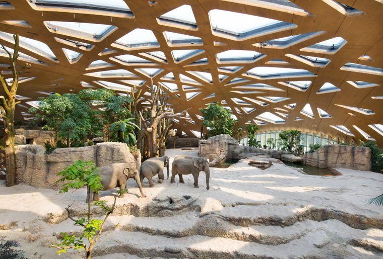 Zoo De Zurich Zurich Zürich Activité Loisirs Ch