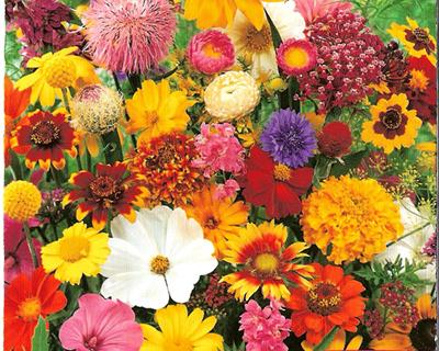 Flores Anuais Mistura - JARDICENTRO LOJA ONLINE