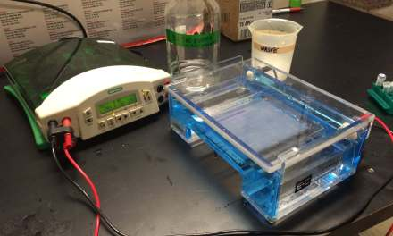 Tudo o que você precisa saber sobre a eletroforese