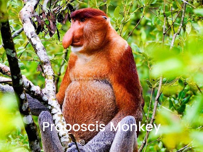 8 endangered animals in malaysia lokalocal
