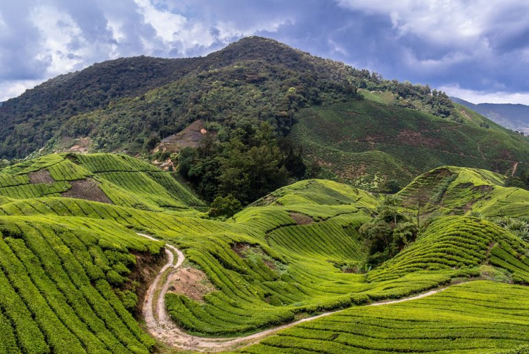 Cameron Highlands: 20 must-do things for first timers